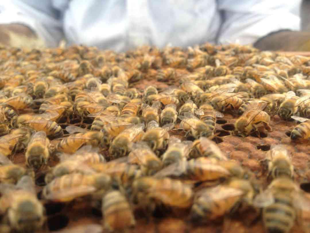 honey bees restaurant