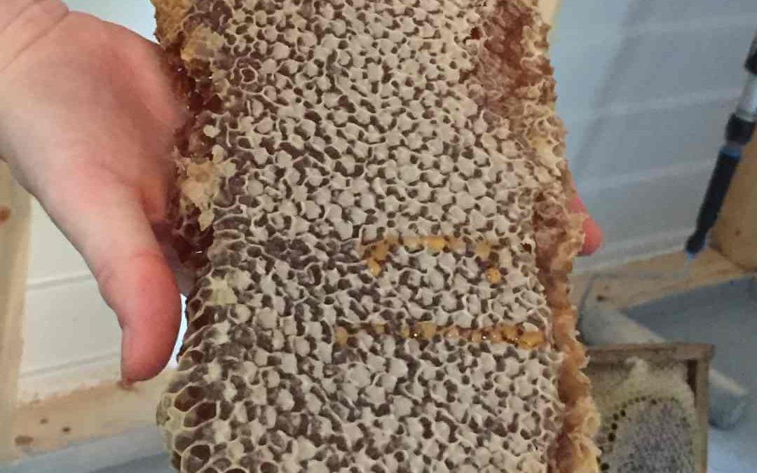 Do Bees Eat Honey?